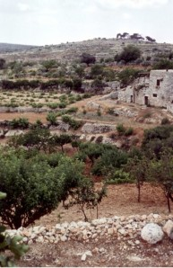 Vineyard near Hebron.Grapes are one of the most important products of Palestine. The first mention of them is in the life of Noah. It is afterwards frequently mentioned both in the Old and New Testaments. Dried grapes and wine were the most frequent products of vineyards.