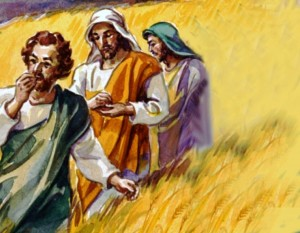 Jesus' disciples plucked and ate some heads of grain in a grainfield, but were chastized by the Pharisees for doing this on the Sabbath (Matthew 12:1-8; Mark 2:23-28; Luke 6:1-5)