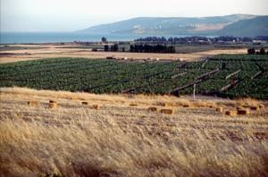 Plain of Gennesaret near Capernaum