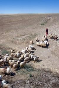shepherd_270314